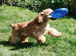 pup with frisbee
